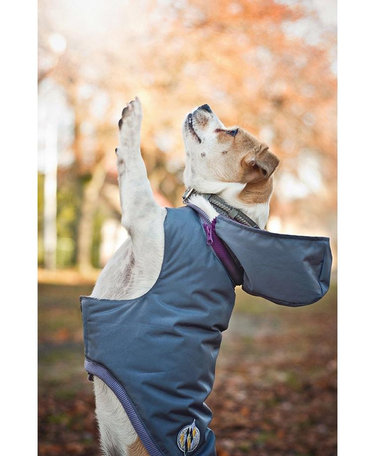 Winter Dog Jacket Lillac