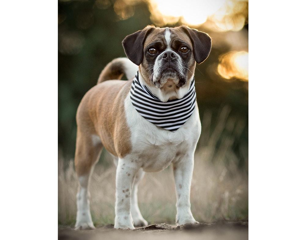 Dog Bandana Black & White