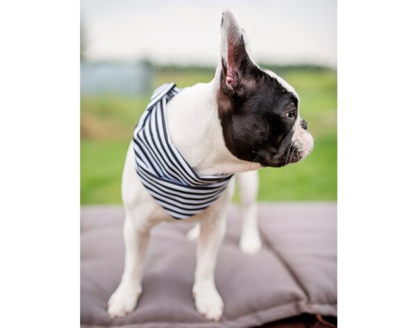 Dog Bandana Black & White